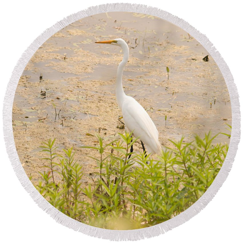 Great Egret Round Beach Towel featuring the photograph Nature's Picture by Linda Kerkau