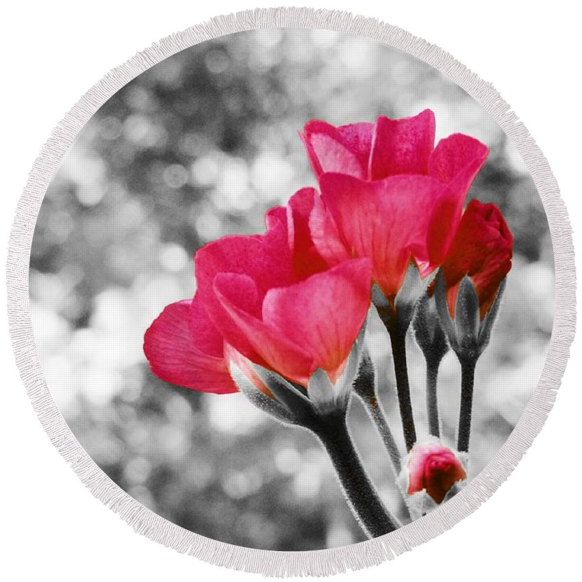 Blue Round Beach Towel featuring the photograph Near Bloom Pink by Johari Smith