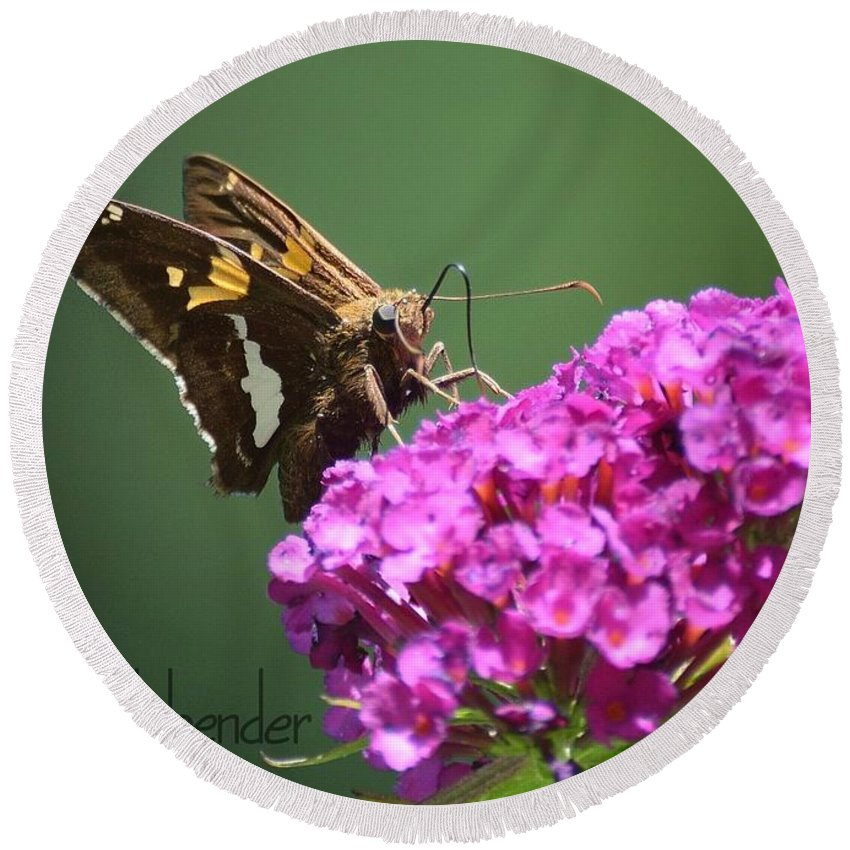 Gardening Round Beach Towel featuring the photograph Nectaring Moth by Debra Bender