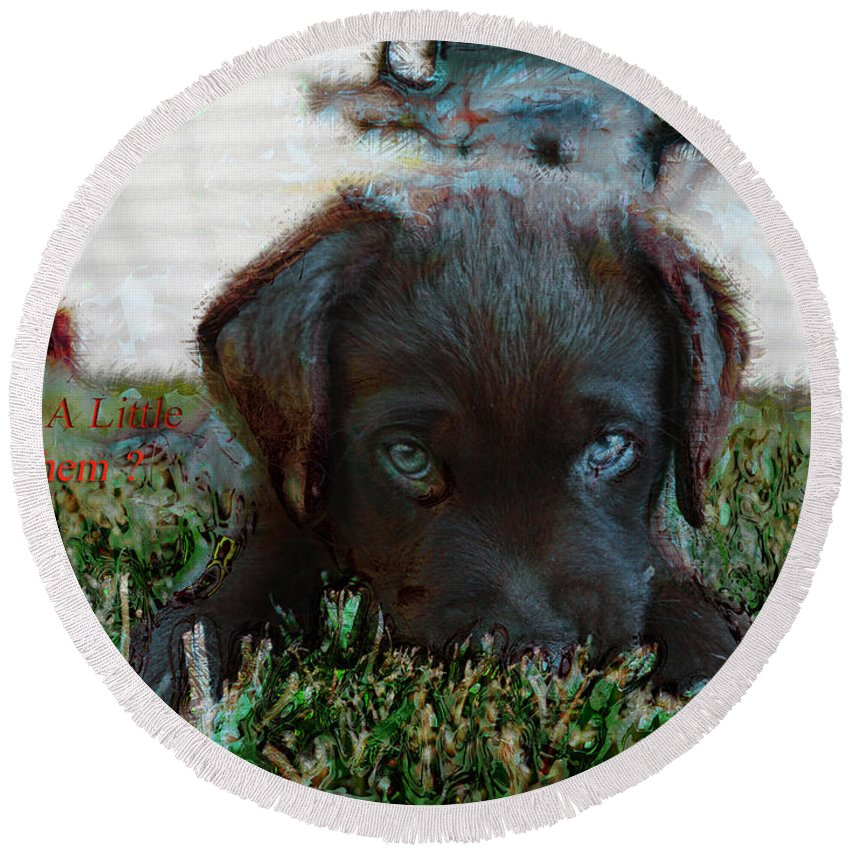 Chocolate Labrador Round Beach Towel featuring the mixed media Need A Little Mayhem? by Mayhem Mediums