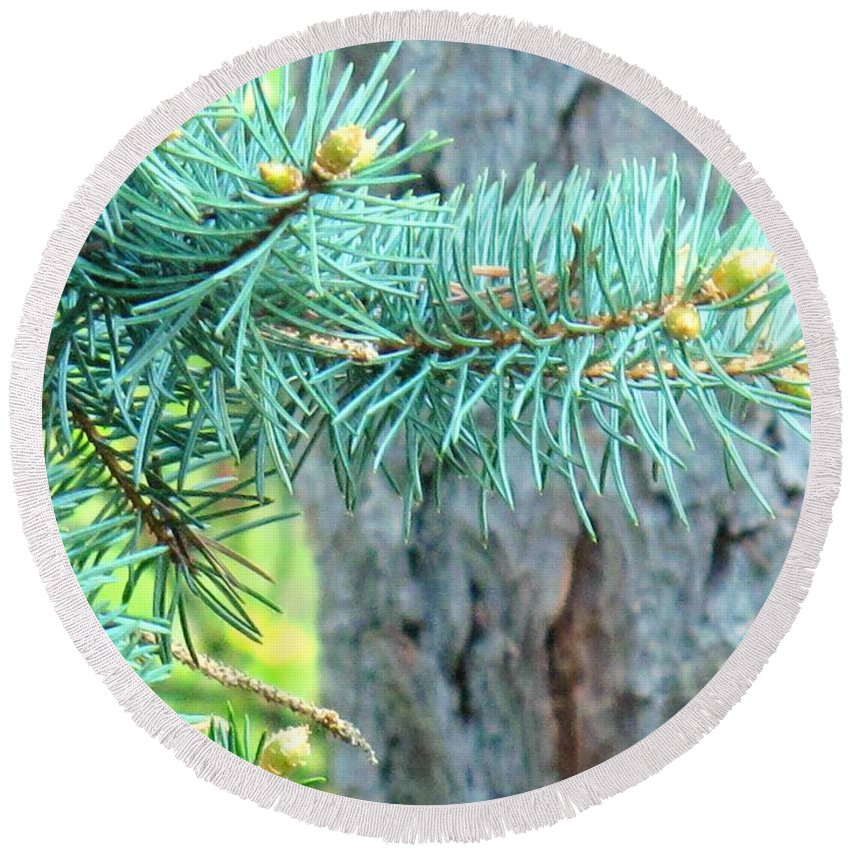 Pine Round Beach Towel featuring the photograph Needles by Ian MacDonald