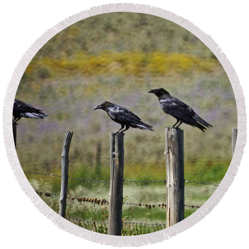 Crows Round Beach Towel featuring the photograph Neighborhood Watch Crows by Heather Coen