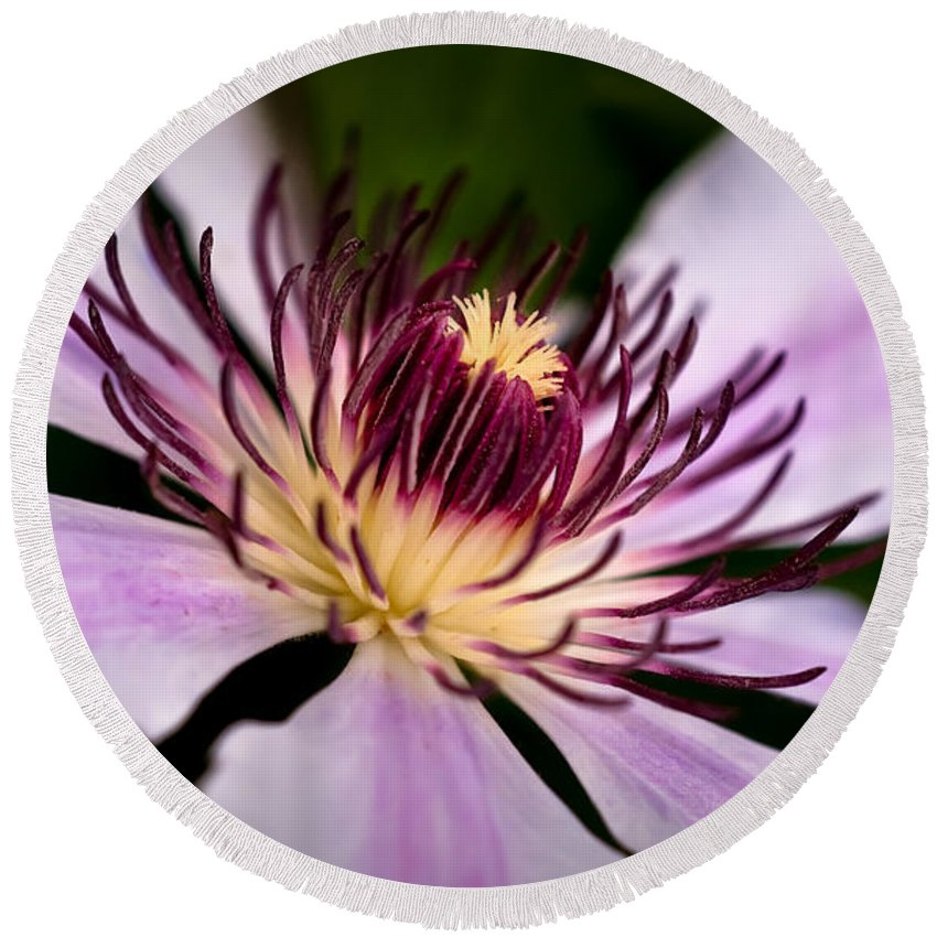 Clematis Round Beach Towel featuring the photograph Nellie Moser Clematis by Onyonet Photo Studios