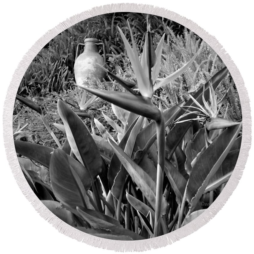 Big-sur Round Beach Towel featuring the photograph Nepenthe Bird Of Paradise B And W by Joyce Dickens