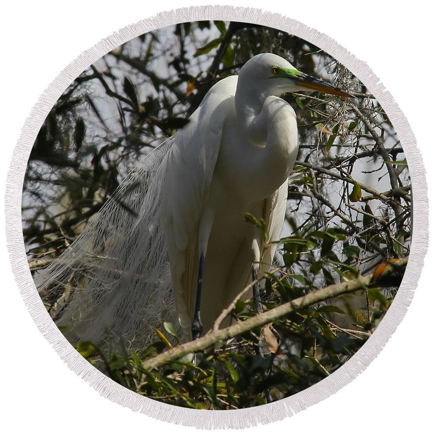 Bird Round Beach Towel featuring the photograph Nesting Egret by Denise Mazzocco