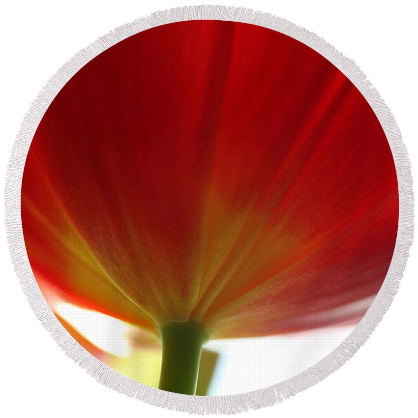Tulip Round Beach Towel featuring the photograph New Day by Amanda Barcon