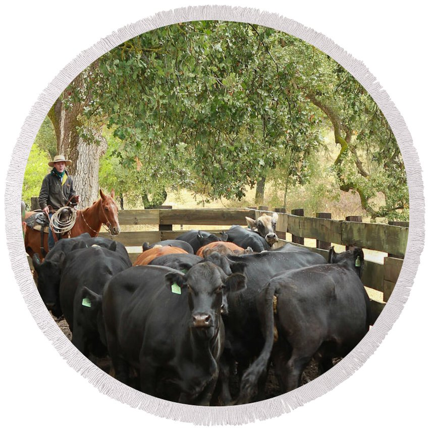 Nick Round Beach Towel featuring the photograph Nick Loading Cattle by Diane Bohna