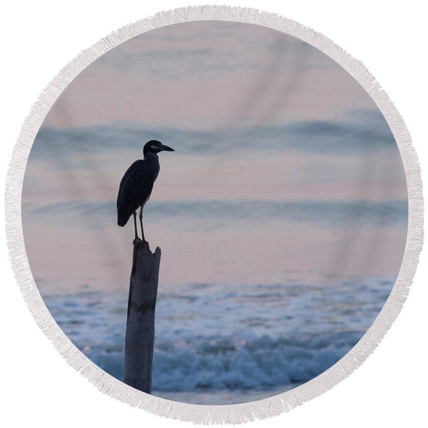 Night Heron Dawn Post Round Beach Towel featuring the photograph Night Heron Dawn Post by Paul Rebmann