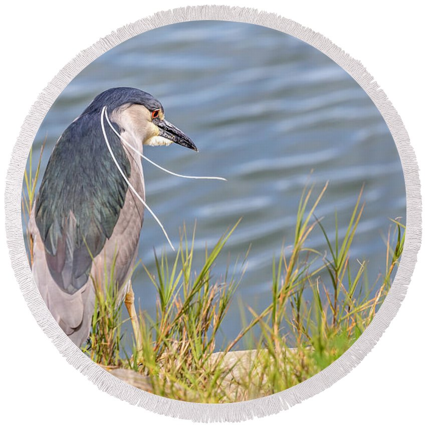 Bird Round Beach Towel featuring the photograph Night Heron by Kate Brown