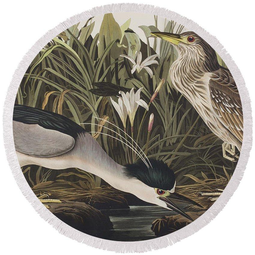 Night Heron Round Beach Towel featuring the painting Night Heron Or Qua Bird by John James Audubon