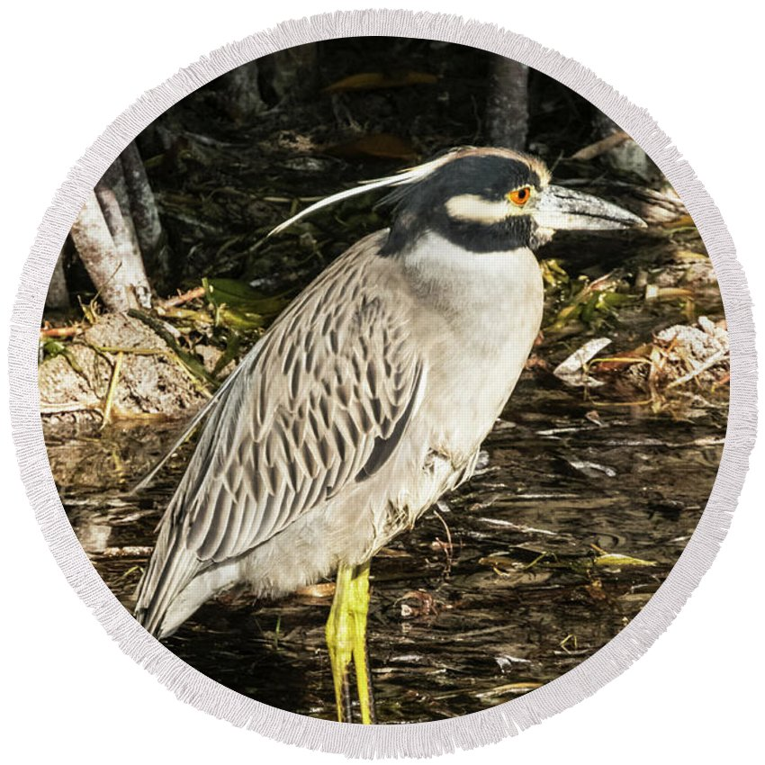 Bird Round Beach Towel featuring the photograph Night Heron Standing On A Rock In Key West by Bob Slitzan