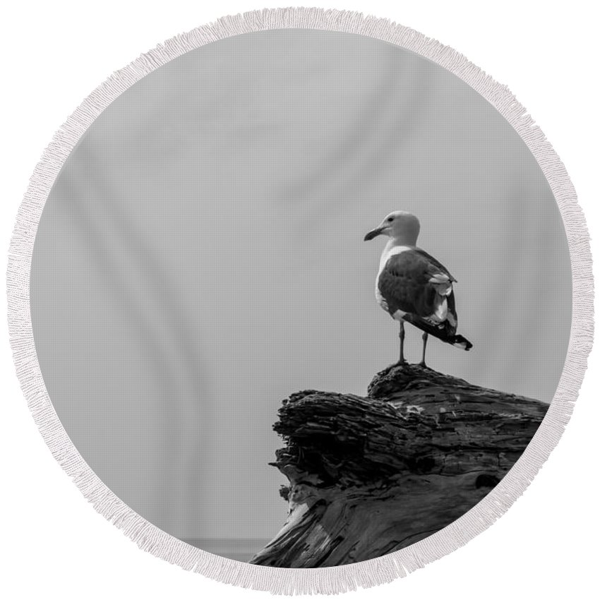 Emma Wood Round Beach Towel featuring the photograph Gull On Driftwood Bw by Patti Deters