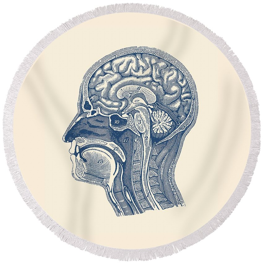 Normal Anatomy Of Human Brain Vintage Print Round Beach Towel For