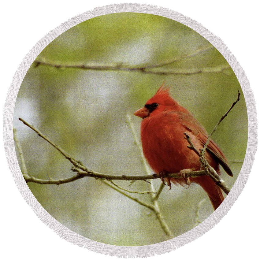 Cardinal Round Beach Towel featuring the photograph Northern Cardinal by Michael Peychich