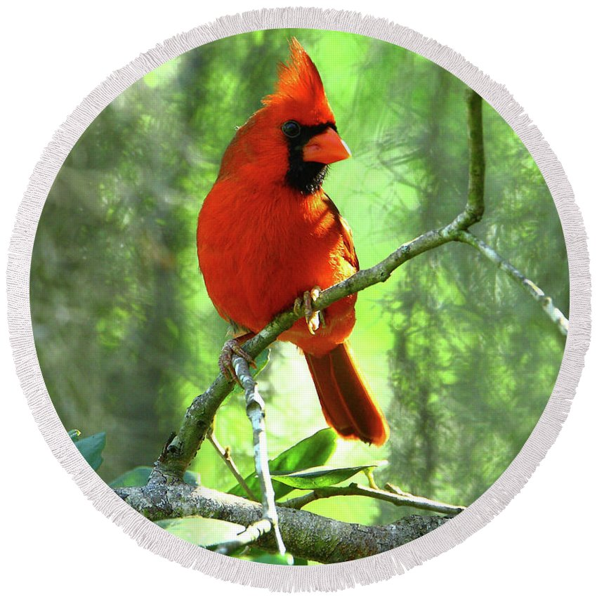 Nature Round Beach Towel featuring the photograph Northern Cardinal Proud Bird by Herbert L Fields Jr