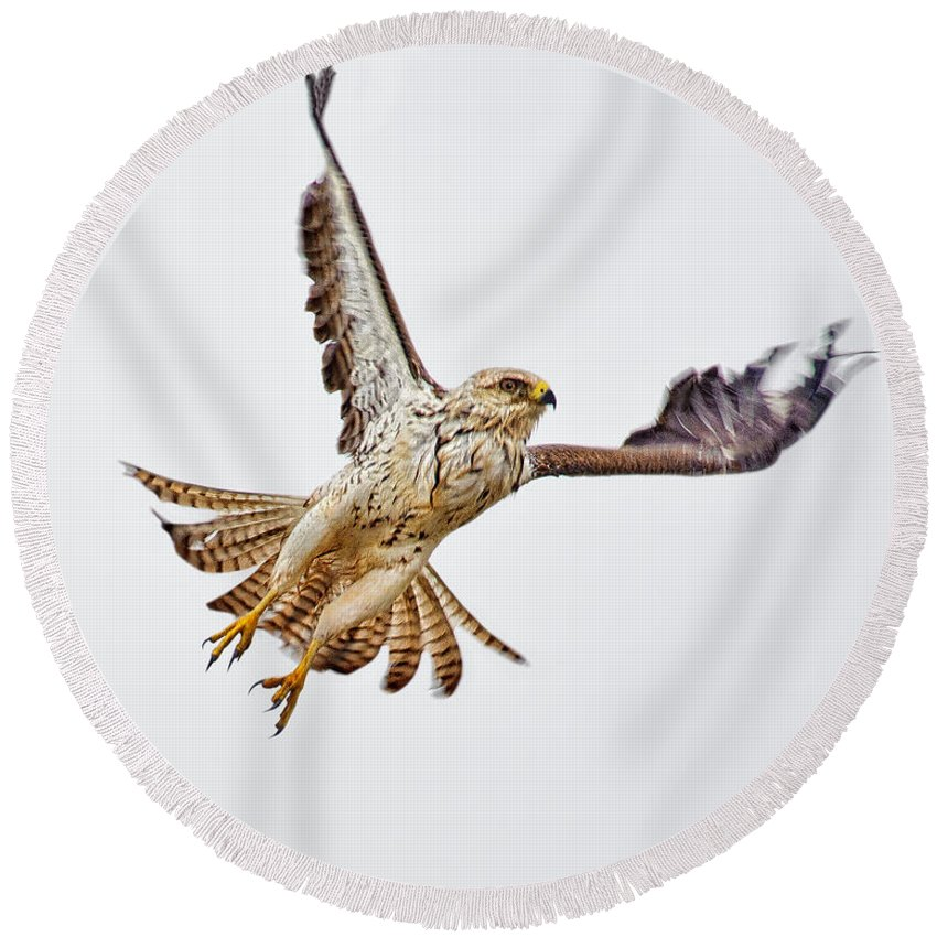 Tim Flanigan Round Beach Towel featuring the photograph Northern Harrier by Timothy Flanigan