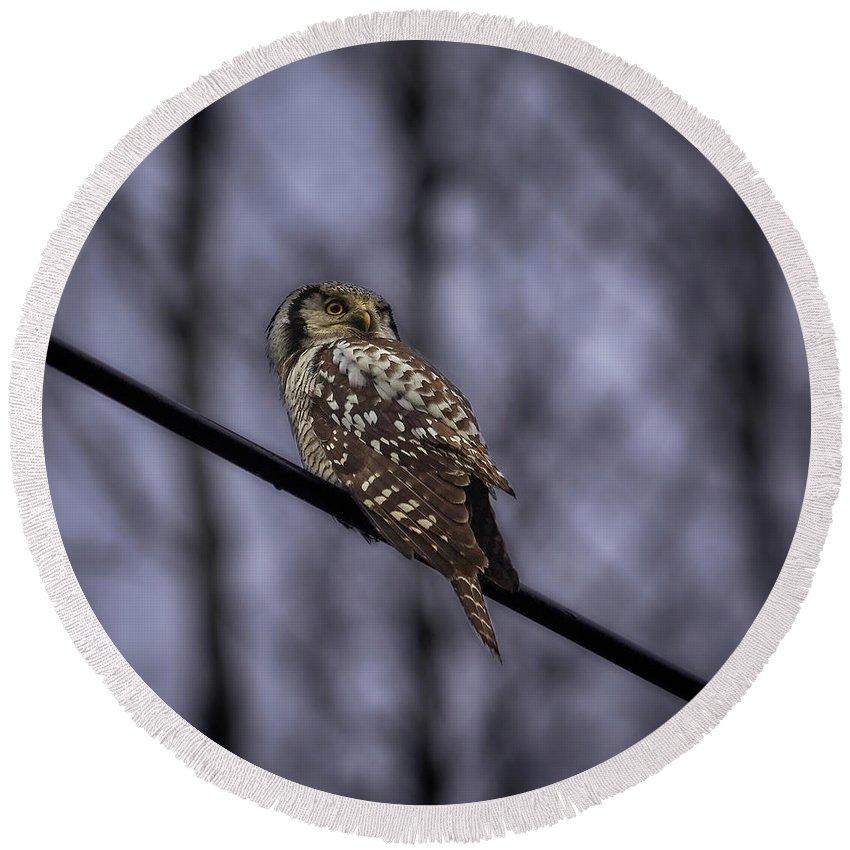 Lehtokukka Round Beach Towel featuring the photograph Northern Hawk-owl 6 by Jouko Lehto