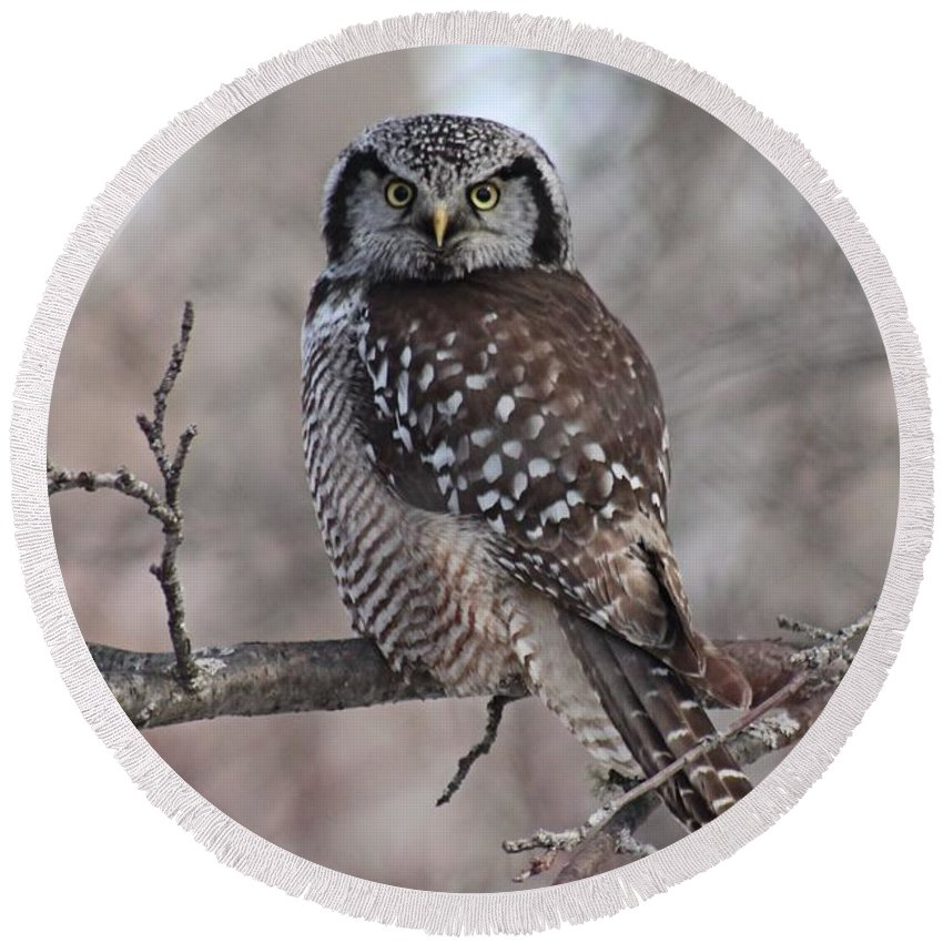 Northern Hawk Owl Round Beach Towel featuring the photograph Northern Hawk Owl 9470 by Joseph Marquis