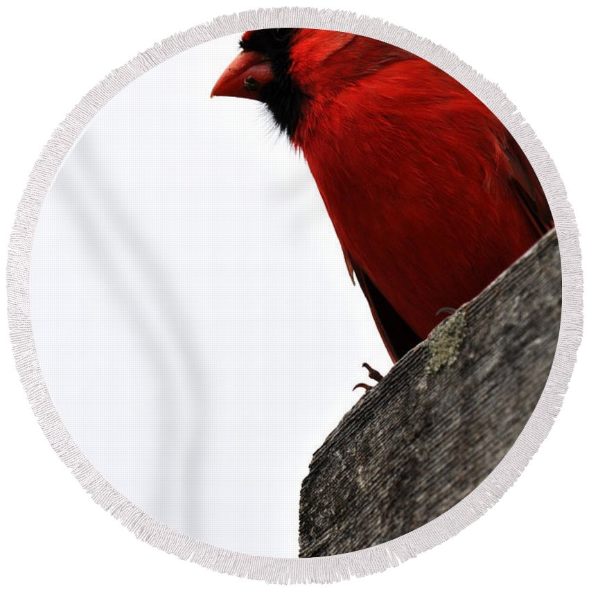 Chicago Botanic Garden Round Beach Towel featuring the photograph Northern Red Cardinal by Kyle Hanson
