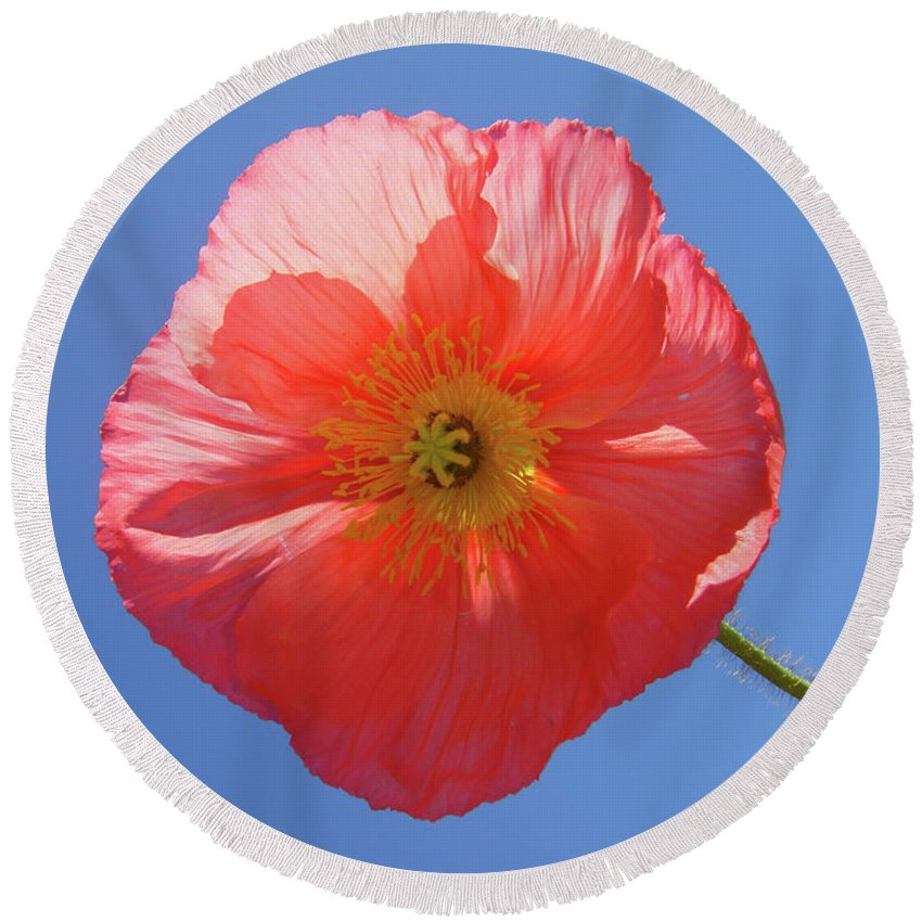 Poppy Round Beach Towel featuring the photograph Nothing But Blue Skies by Donna Blackhall