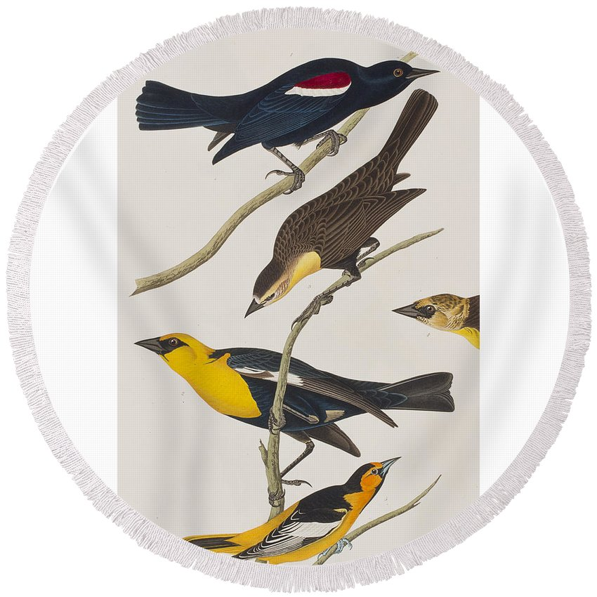Oriole Round Beach Towel featuring the painting Nuttall's Starling Yellow-headed Troopial Bullock's Oriole by John James Audubon