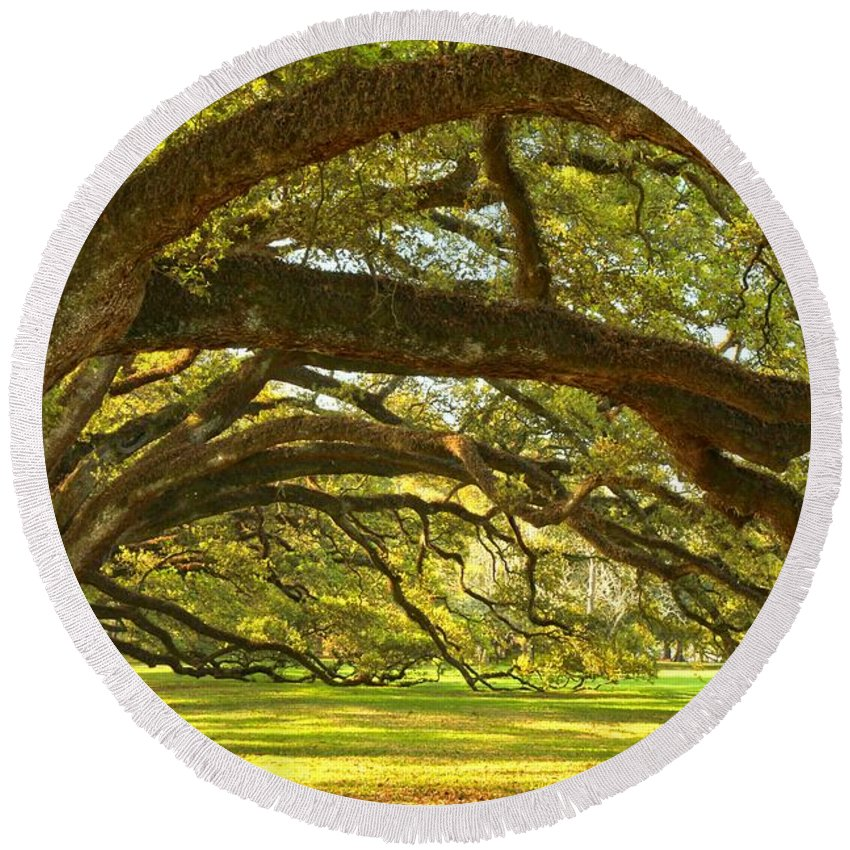Tunnel Of Oak Trees Round Beach Towel featuring the photograph Oak Alley Tunnel Of Oaks by Adam Jewell