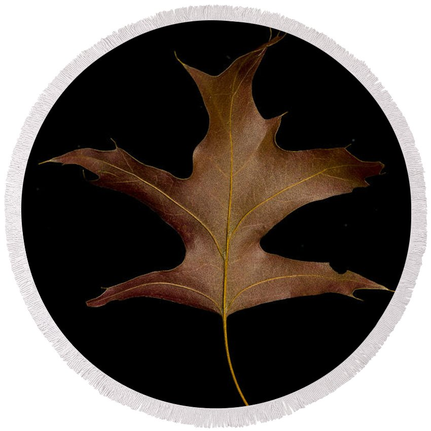 Autumn Round Beach Towel featuring the photograph Oak Leaf by David Stone