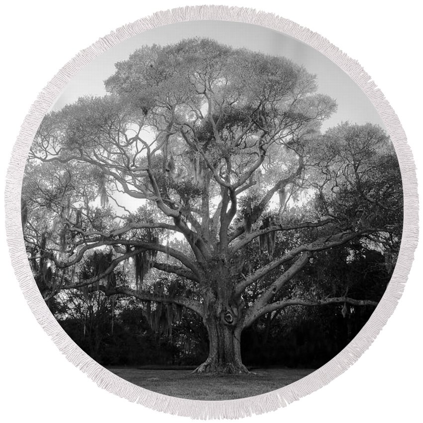 Oak Tree Round Beach Towel featuring the photograph Oak Tree by David Lee Thompson