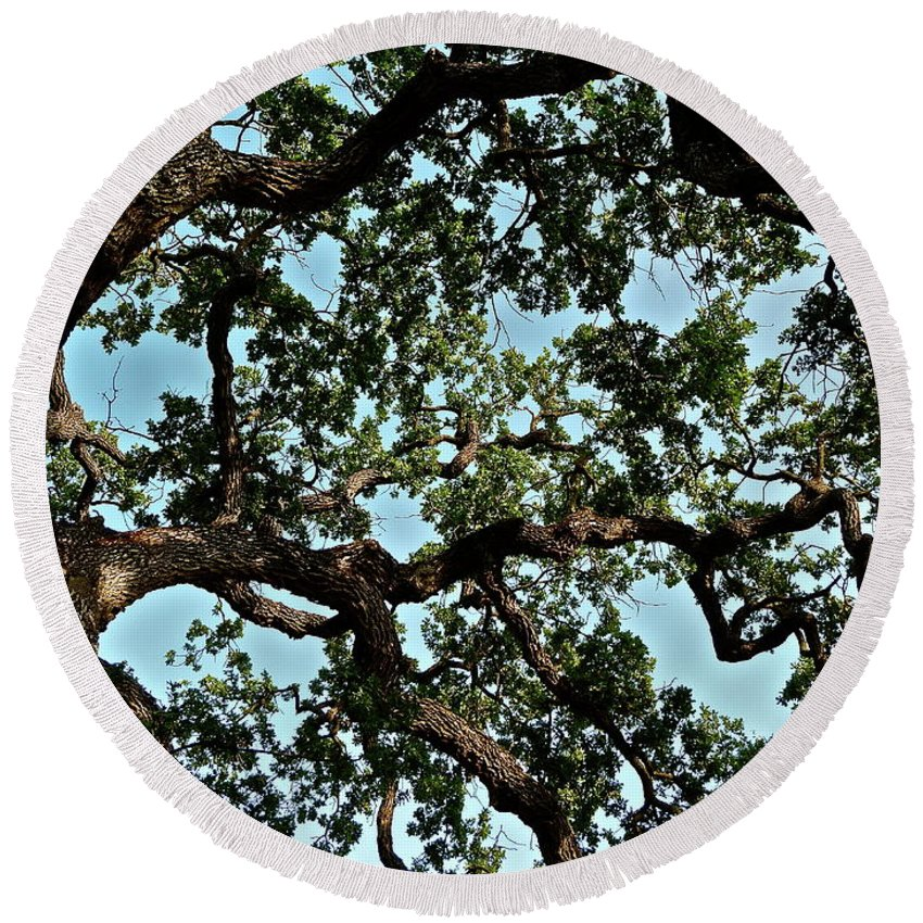 Trees Round Beach Towel featuring the photograph Oak Tree Three by Diana Hatcher
