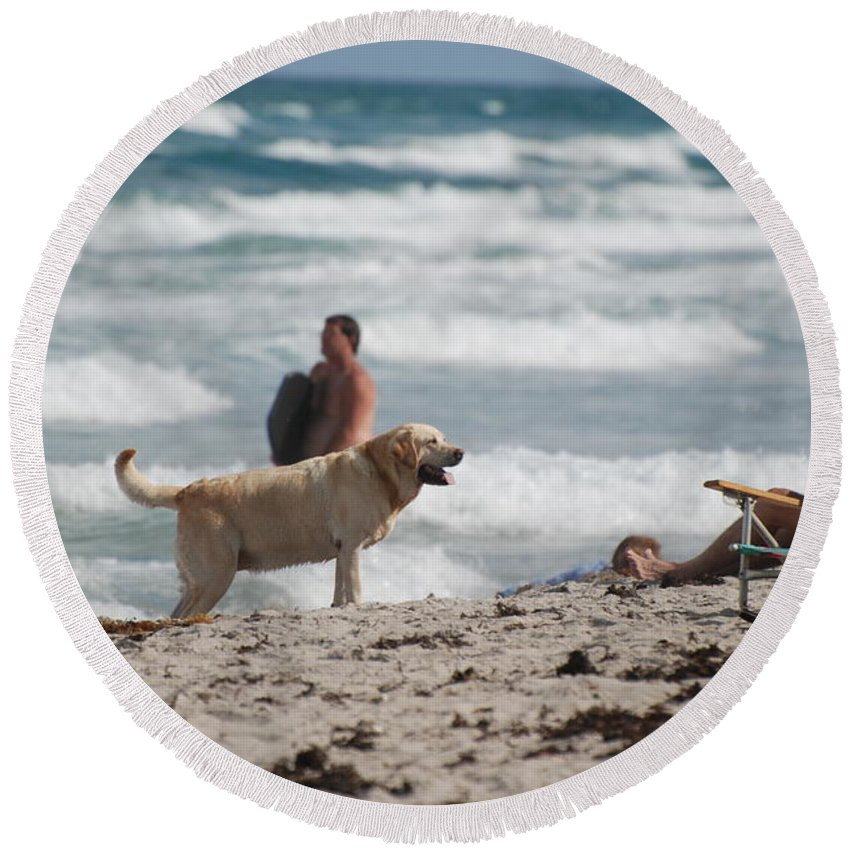 Waves Round Beach Towel featuring the photograph Ocean Dog by Rob Hans
