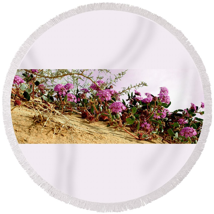 Ocotillo Wilds Round Beach Towel featuring the photograph Ocotillo Wilds by Chris Brannen