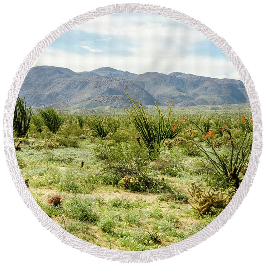 Wildflowers Round Beach Towel featuring the photograph Octillo Field by Jerry Sellers