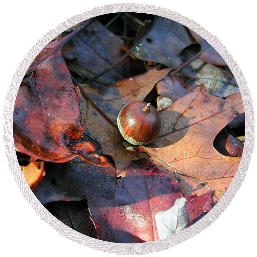 Photography Round Beach Towel featuring the photograph October Acorn by Steven Scanlon