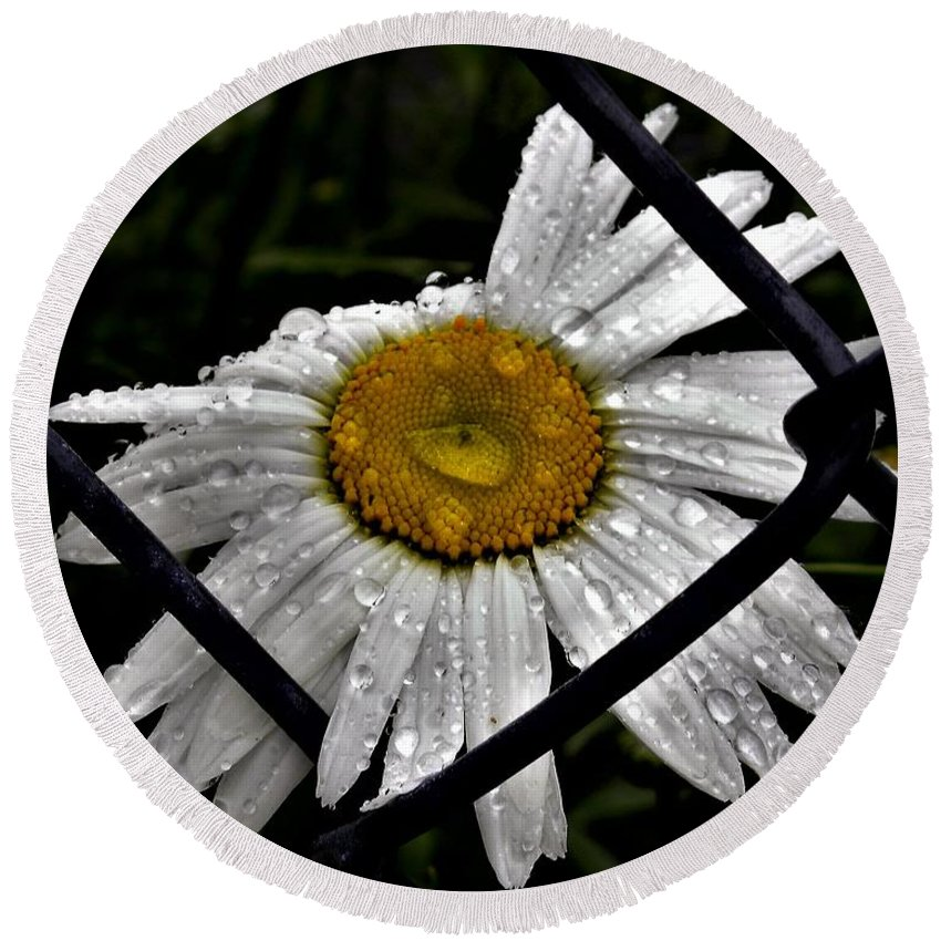 Daisy Round Beach Towel featuring the photograph Office Art by Julie Hodgkins