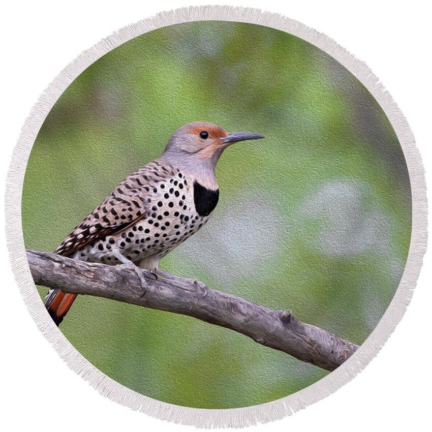 Wild Round Beach Towel featuring the photograph Oil Painted Northern Flicker by Celine Pollard