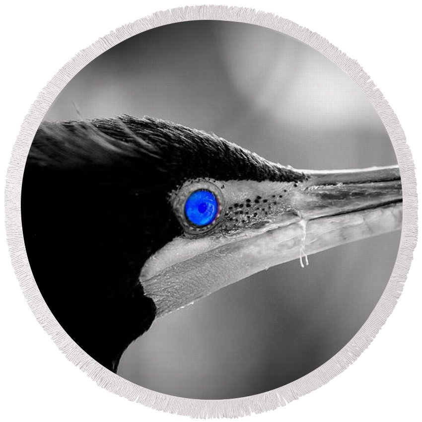 Double-crested Cormorant Round Beach Towel featuring the photograph Old Blue Eyes Is Back by Imagery-at- Work