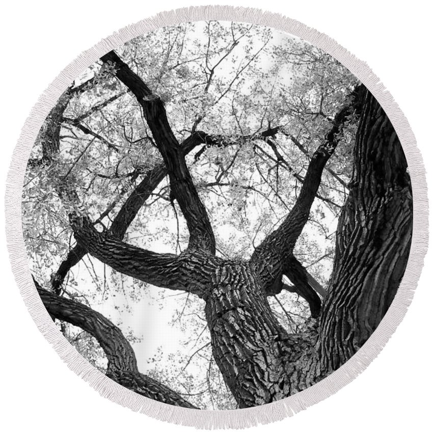Cottonwood Round Beach Towel featuring the photograph Old Cottonwood Tree by James BO Insogna