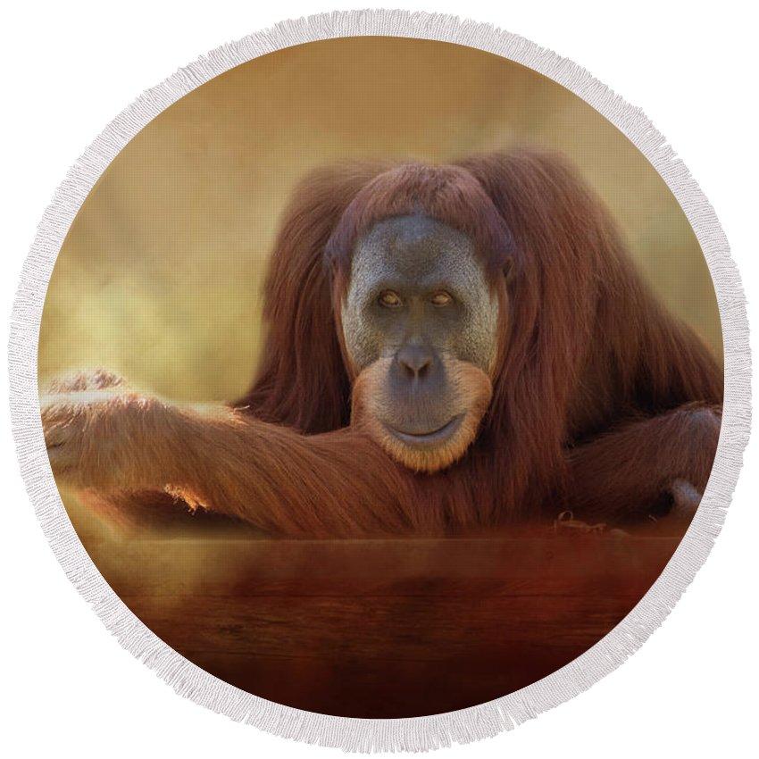 Orangutan Round Beach Towel featuring the photograph Old Man Orangutan by Michele Wright