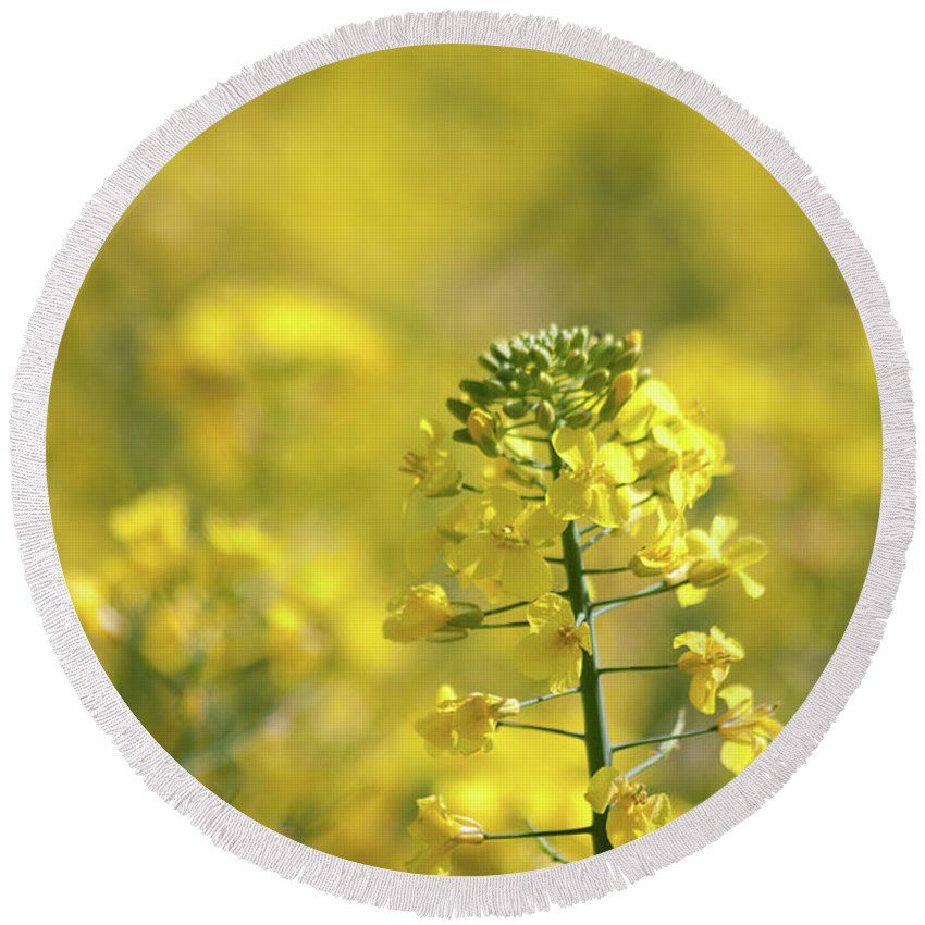 Countryside Round Beach Towel featuring the photograph Oliseed Rape by Linda Cooke