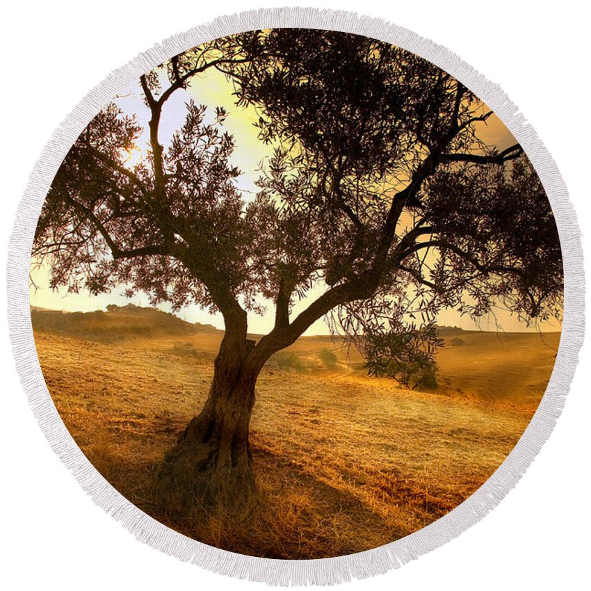 Landscape Round Beach Towel featuring the photograph Olive Tree Dawn by Mal Bray