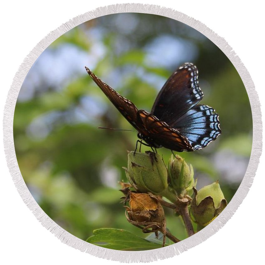 Blue Round Beach Towel featuring the photograph On Blue Wings by Weathered Wood