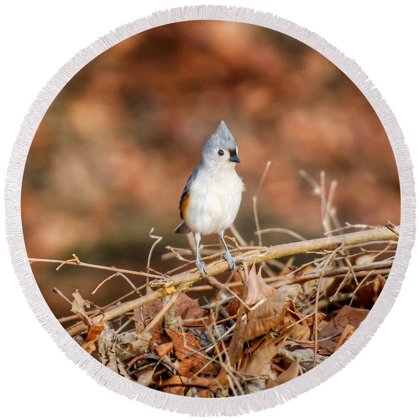 Tufted Titmouse Round Beach Towel featuring the photograph On High Alert by Kerri Farley