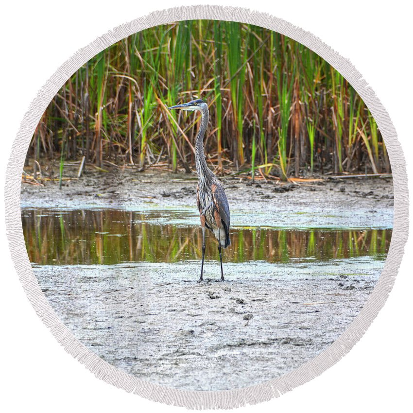 Heron Round Beach Towel featuring the photograph On The Prowl by Angelo Marcialis