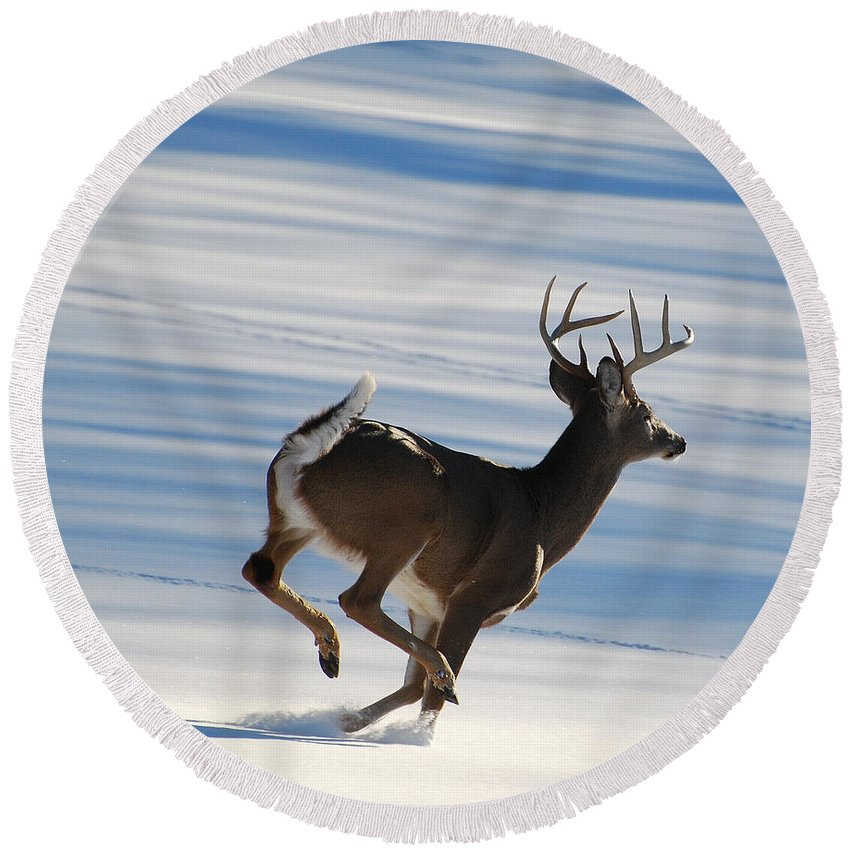 Deer Round Beach Towel featuring the photograph On The Run by Todd Hostetter