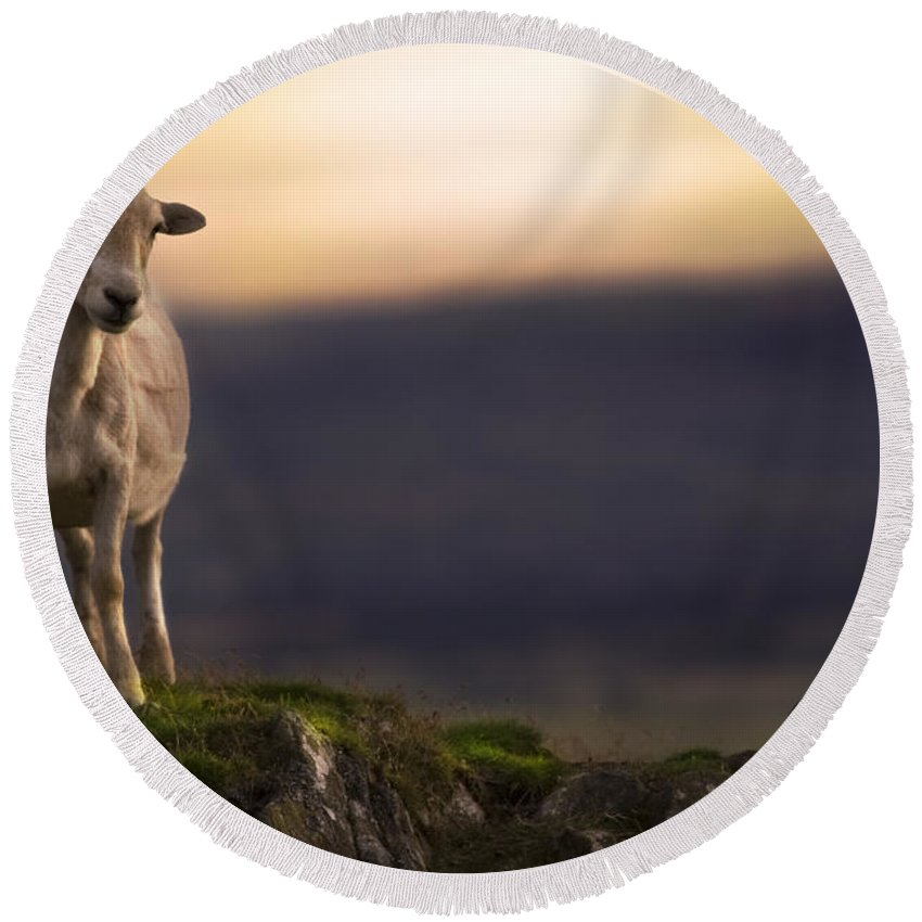 Sheep Round Beach Towel featuring the photograph On The Top Of The Hill by Angel Ciesniarska