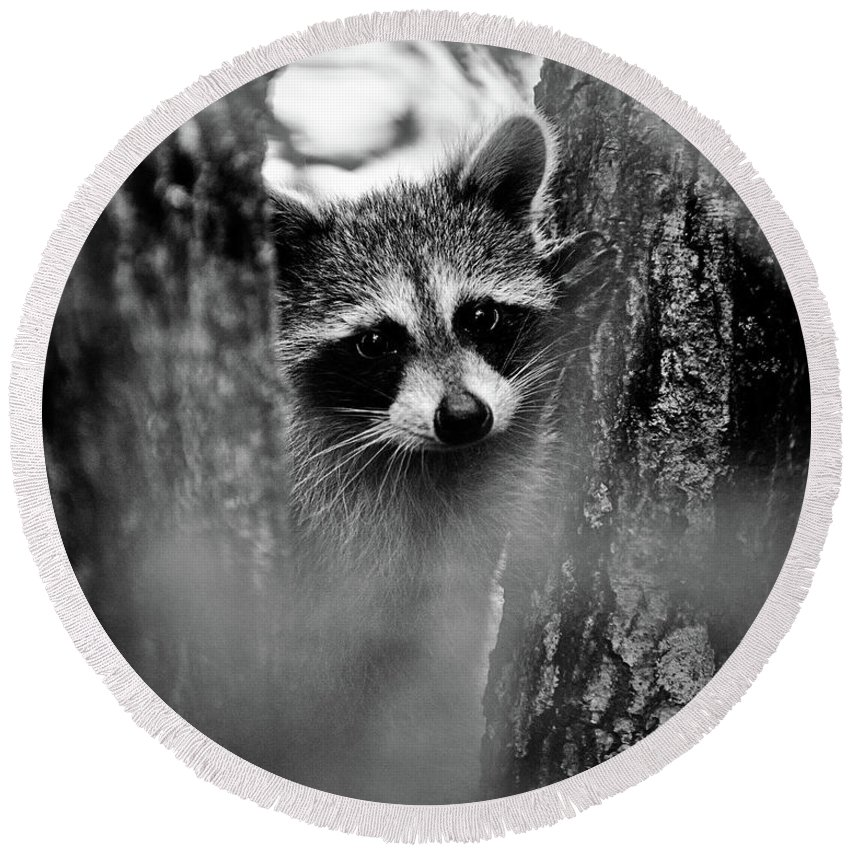 Racoon Round Beach Towel featuring the photograph On Watch - Bw by Christopher Holmes