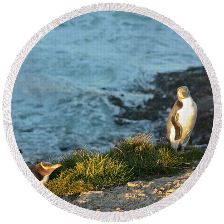 Yellow-eyed Penguin Round Beach Towel featuring the photograph On Watch by Bruce