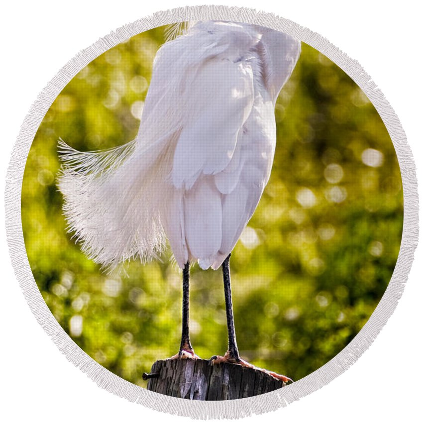 snowy Egret Round Beach Towel featuring the photograph On Watch by Christopher Holmes