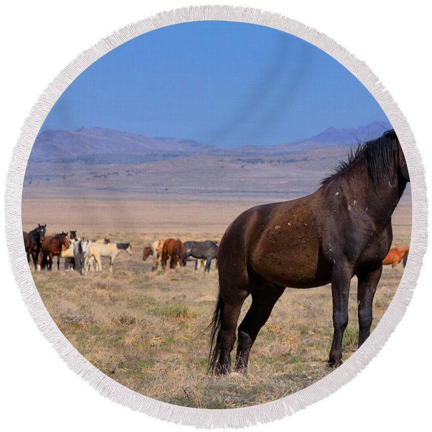 Wild Horse Round Beach Towel featuring the photograph Onaqui Sentinel by Greg Norrell