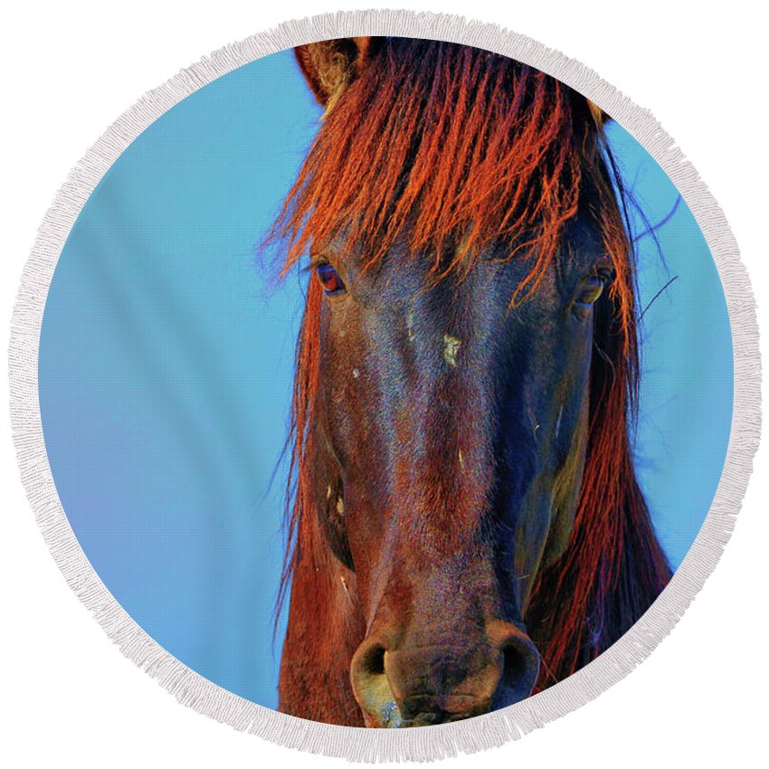 Horse Round Beach Towel featuring the photograph Onaqui Wild Stallion Portrait by Greg Norrell